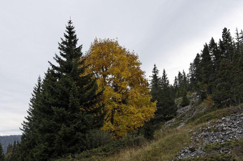 2012-10-0616-50-12